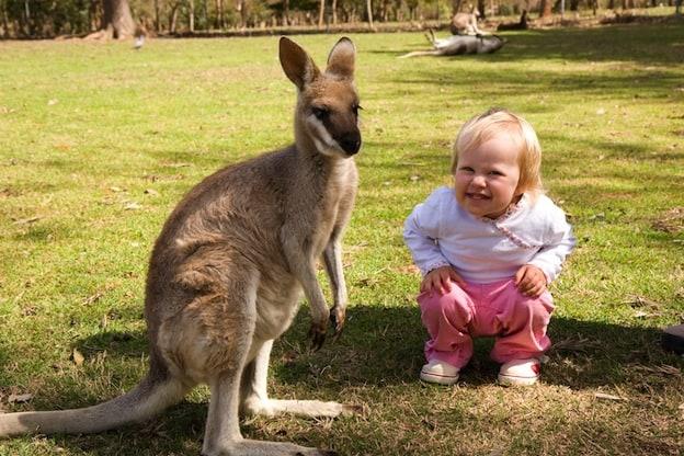 Relación entre el ser humano y los canguros