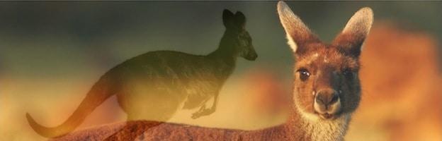 types of kangaroos_feature